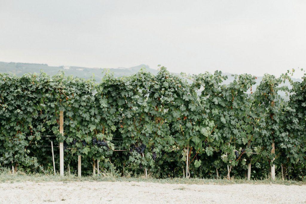 viti nelle langhe - welcome dinner destination wedding