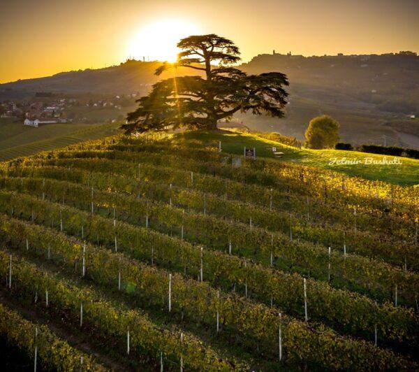wedding in piedmont vineyards: a destination wedding